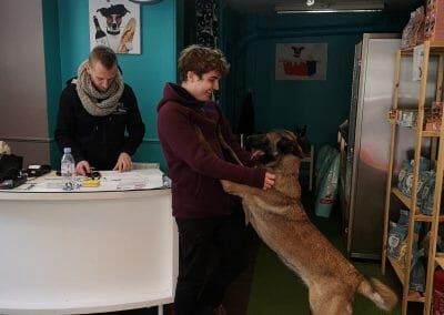Animal Work Experience Abroad Dog Groomers