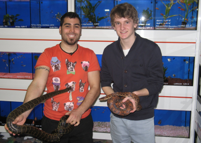 Pet Shop Work Experience Abroad Placement Animals