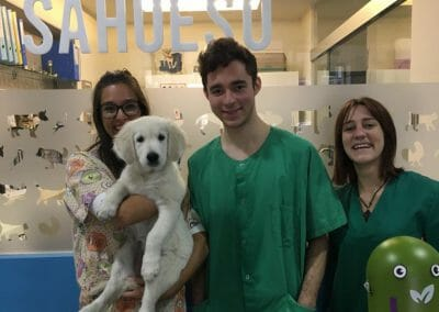 Vet Work Experience Abroad Placement
